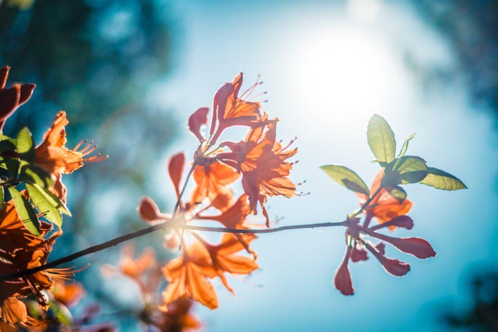 Fresh flower shining